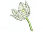 Alpenanemone weiss