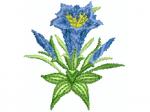 Enzianbusch mit 2 geschlossenen Blüten
