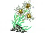 Edelweissbusch