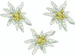 Edelweiss 3 Stück