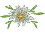 Edelweiss 15