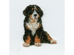 Berner Sennenhund Prym Motiv