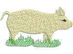Schwein 5