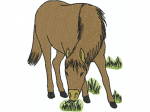 Pferd 1b