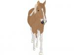 Pferd Sabira