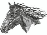 Pferdekopf schwarz-weiss