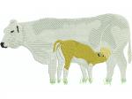 Kuh Piemontaise