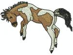 Pferd Mustang