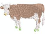 Simmentaler Kuh 1
